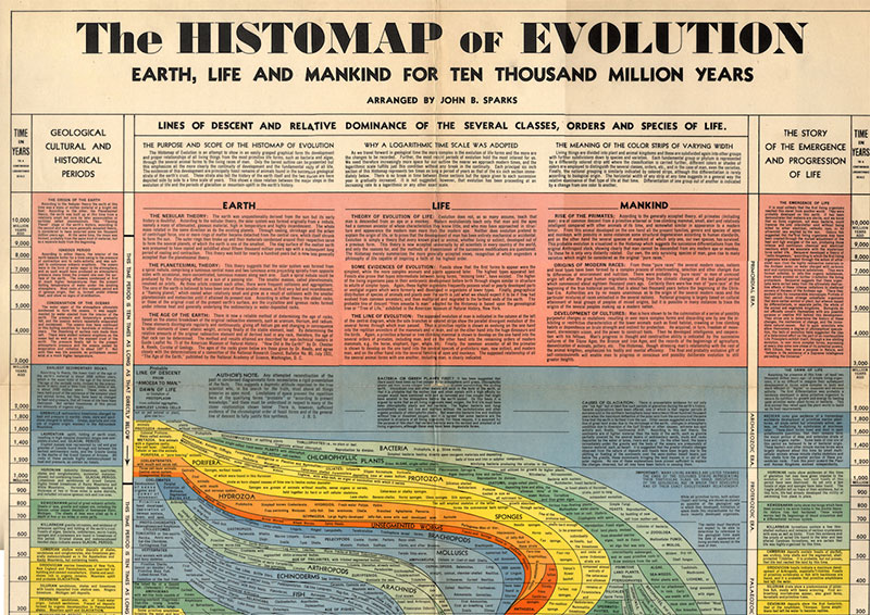 History of Evolution over 10,000 million years | The Gray Escape with Natalie Gray