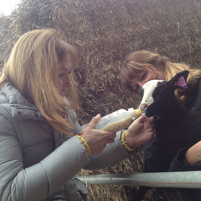 Natalie feeds a lamb at Aura-Soma's Biodynamic Farm, Shire Farm, in Lincolnshire